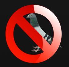 solutions contre les pigeons faites fuir les pigeons. Black Bedroom Furniture Sets. Home Design Ideas